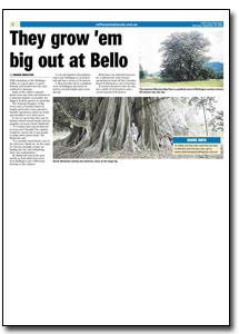 News Article : Coffs Coast Advocate